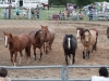 montgomery_nj_rodeo_2014-10